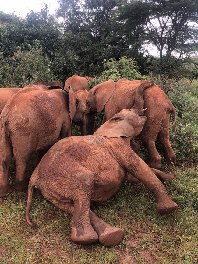 Play Time @DSWT
